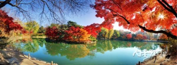 창경궁 춘당지의 가을-1.jpg