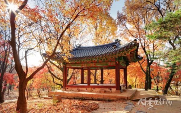 창경궁 관덕정의 가을-1.jpg