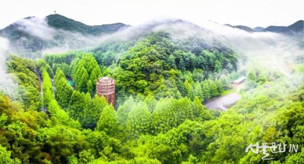 대전광역시_장태산 자연휴양림_대전시청 제공.jpg