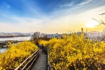 [서울시] 서울의 아름다운 봄 꽃길 160선