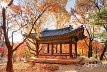 [문화재청 소식] 궁궐을 물들이는 단풍 언제가 절정일까?